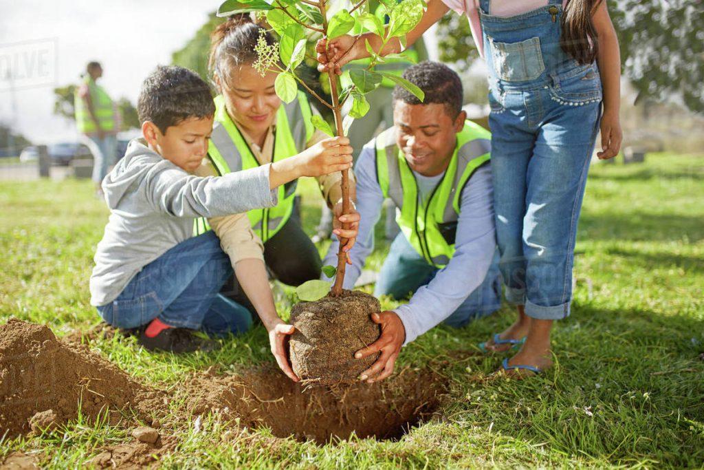 Ademas de la participación del gobierno, los ciudadanos pueden tomar acción para mejorar y sostener el arbolado urbano.